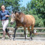 Cathrin Flößer – Training für Pferd und Reiter