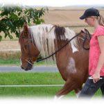 Pferde Bewegen