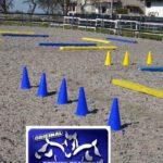Petra's Blau-Gelbes Pferdetraining