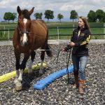 Rentner-Pferd Louiss ist dank Equikinetic und Dual-Aktivierung top fit!!!