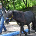 Equus solis