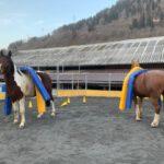 Equi-horse