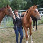Pferdetraining-MV