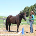 E(qui)motionale Balance – mobiles Pferdetraining