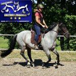 Vom Jungspund zum Reitpferd mit Equikinetic und Dual-Aktivierung