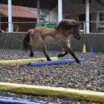 Pferdetraining Marion Friedrich