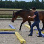 Pferdeosteopathie & Training Denise Hovermann