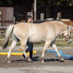MB Pferdetraining