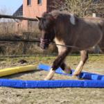 ISLANDPFERDE HINTERM HOF – HIPPOLINI Kinderreitschule – Praxis für Heilpädagogische Förderung mit dem Pferd – Pferdetraining Cuxland