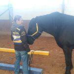 EINKLANG.HORSE