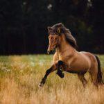 MT_Pferdetraining
