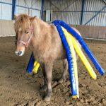 Pferdetraining by Britta Kuebart