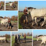 EQUiWORK – Pferdetraining mit Herz und Verstand