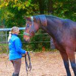 Pferdetraining und Reitunterricht