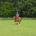 Starkes Pferd