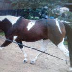 Ursula Kugel – Mit Arbeit, Spaß und Spiel zum gesunden Pferd