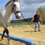 Pferdetraining-Kompakt / Pferdeheilpraxis-Voland