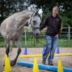 Krahl Pferdetraining
