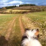 Pferdetraining Vulkaneifel