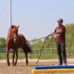 Pferdetraining Ostfriesland