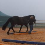 Pferdeausbildung blau – gelb