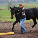Anne Zyweck – Osteopathie & Training