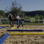 Pferdetraining Henke