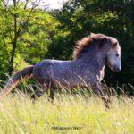 Islandpferde-Hirschquelle breeding.education.training