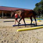 Vanessa Leimüller – Pferdeausbildung