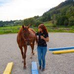 Pferdetraining HARMONIE