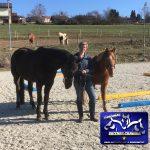 Pferdetraining Arberland